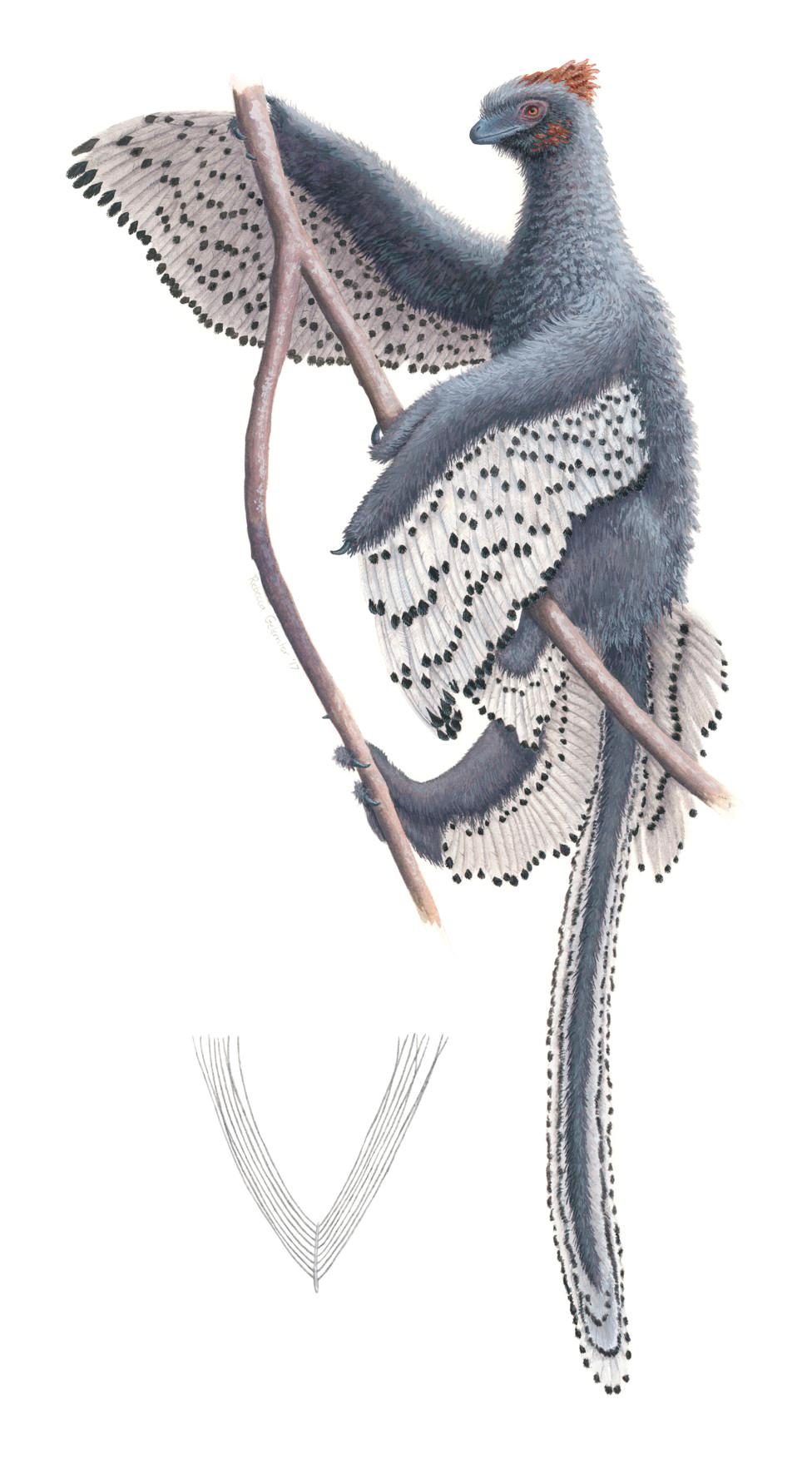 Los dinosaurios con plumas eran casi de peluche