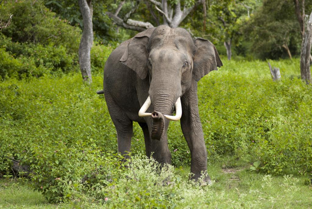 Los elefantes tienen personalidad