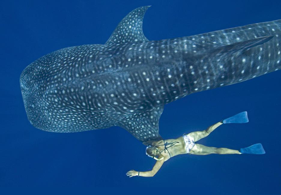 Los grandes del mar