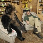 Sorprendentes casos de amistad entre especies