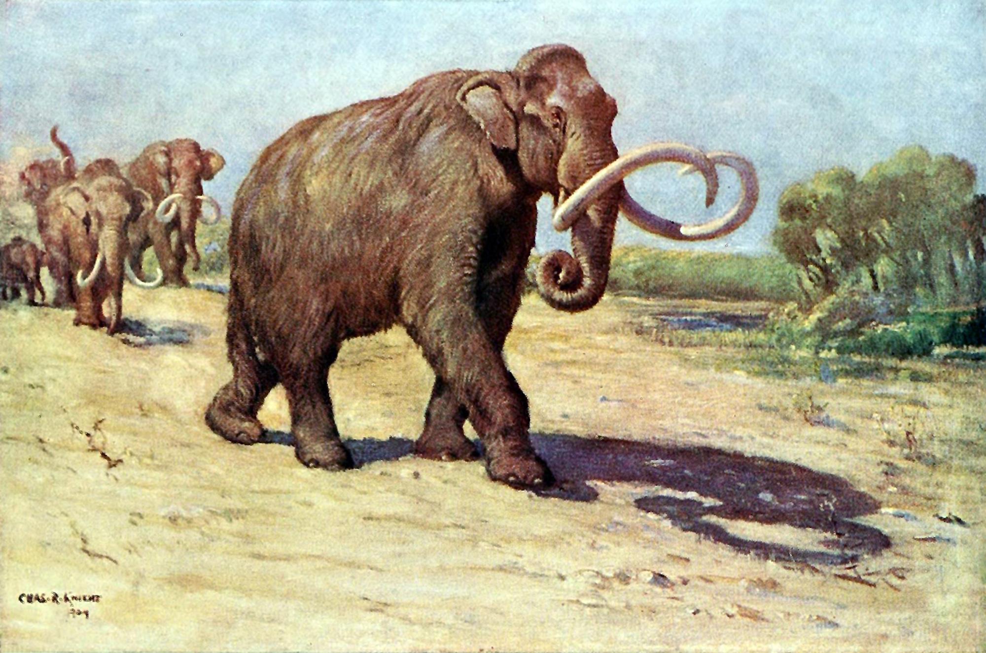 Los mamuts podrían ser especie protegida