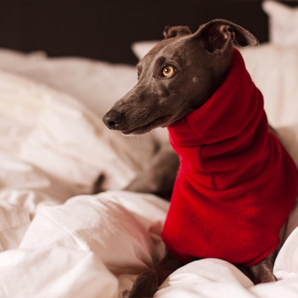 Los perros no distinguen el color rojo