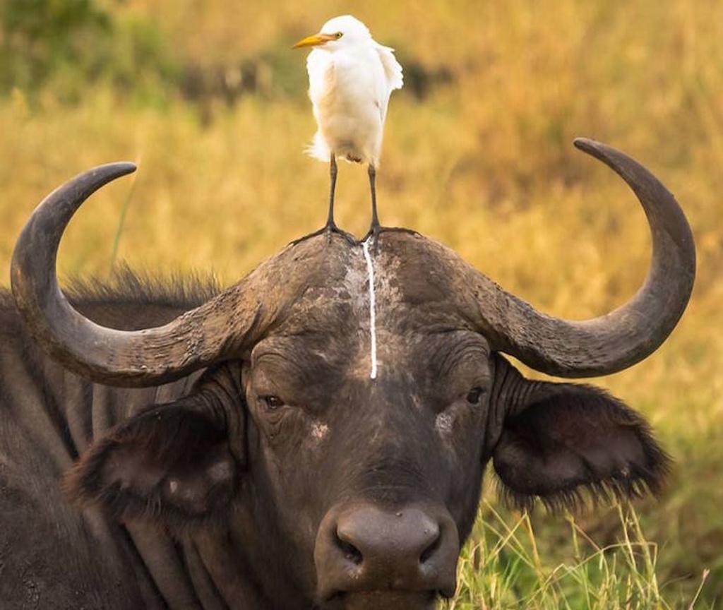 Los retratos de animales más hilarantes