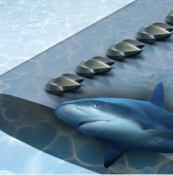 Los tiburones inspiran el diseño de mejores aeronaves
