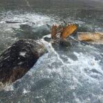 Macabro hallazgo en un lago de Alaska