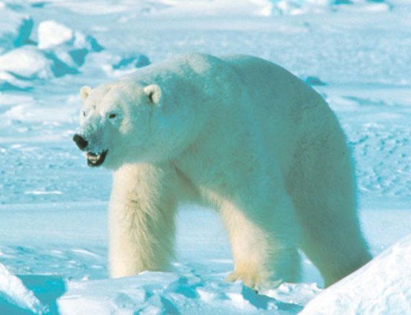 Las especies más amenazadas del planeta