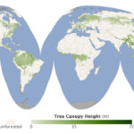 Mapa de los bosques del mundo