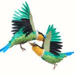 Más que pájaros de papel