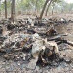 Masacres de elefantes
