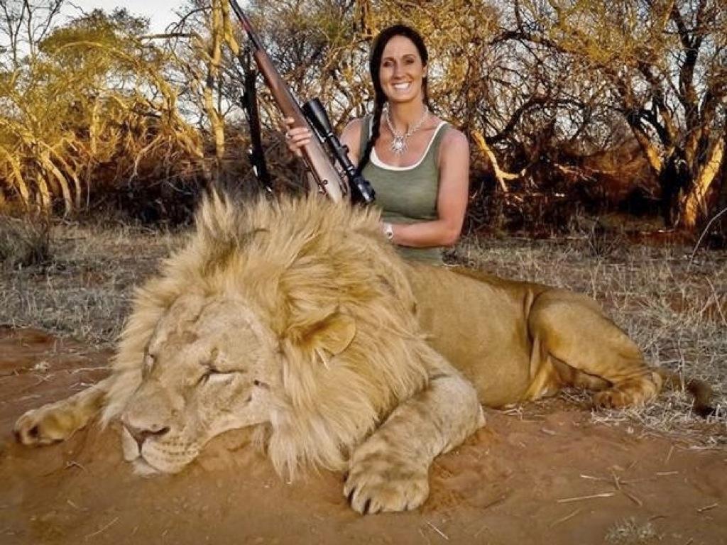 Matar un león es de cobardes