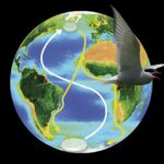 Migraciones al límite