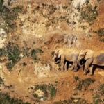 Mil animales en Cabárceno