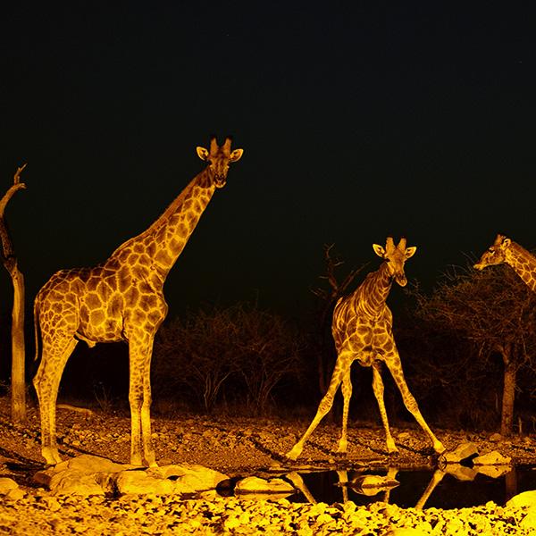 Movida nocturna