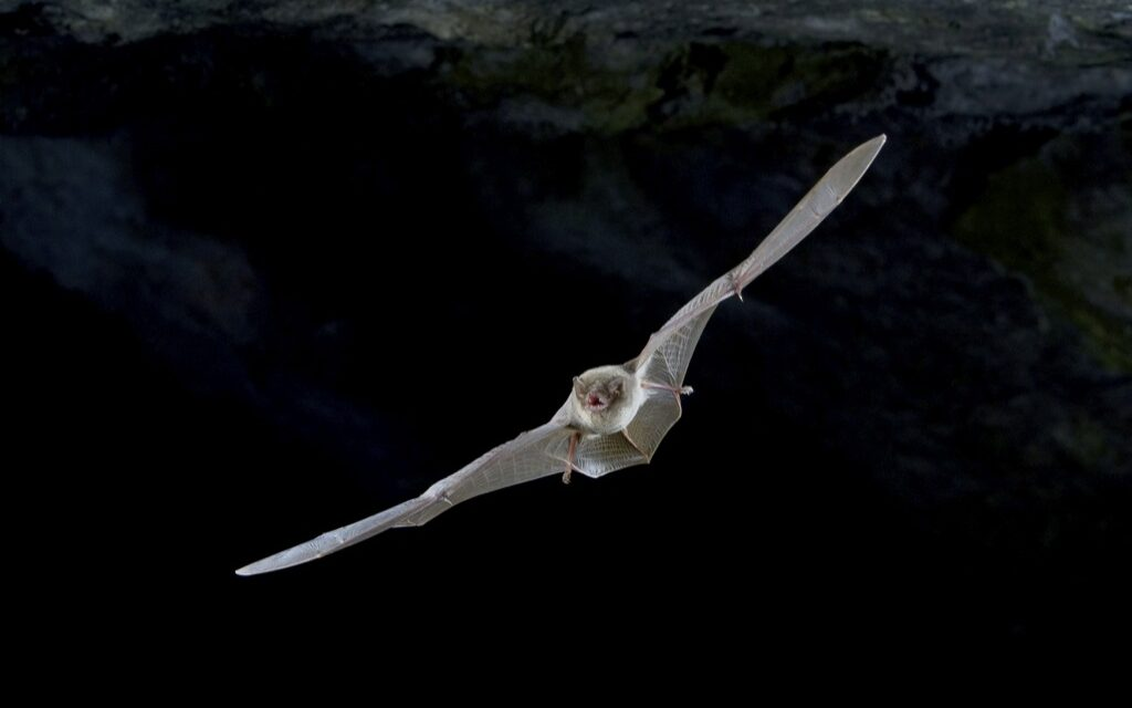 Murciélagos españoles portadores del ébola