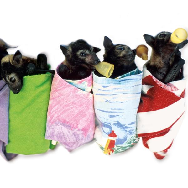 Murciélagos huérfanos