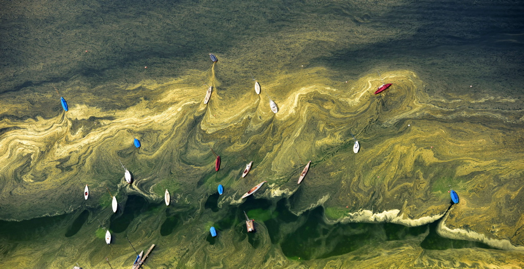 Navegando en un mar de polen