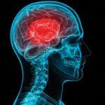 Neuronas vinculadas a la obesidad
