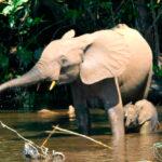 Ni la mitad de elefantes