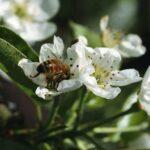 No enfades a una abeja…