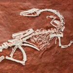 No todos acabaremos fosilizados