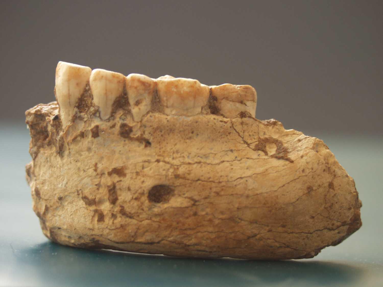 ¿Nos comimos a los neandertales?