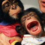 Nuestro instinto, ¿solo se investiga con simios?