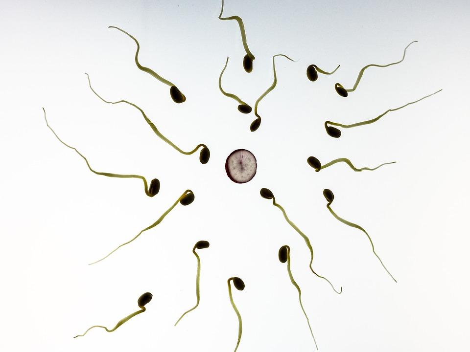 Nueva esperanza para tratar la infertilidad masculina