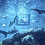 ¿Os gustaría dormir rodeados de tiburones?