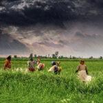 Otra consecuencia del cambio climático: inseguridad alimenticia