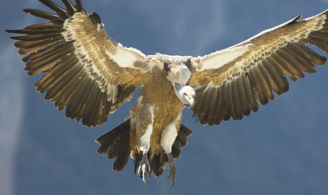15.000 personas en Monfragüe para observar pájaros
