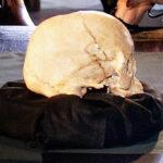 Dicen que han recuperado el segundo cráneo más antiguo de América entre las ruinas del museo quemado en Brasil