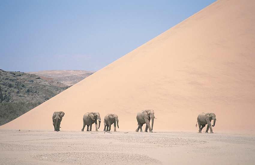 Peligro de desertificación