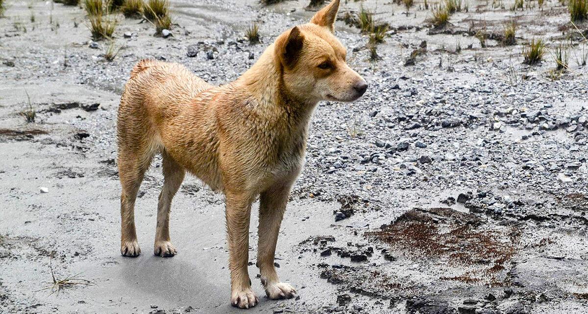 ¿Por qué es este el perro más raro del mundo?