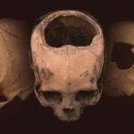 ¿Por qué estos cráneos incas sorprenden tanto a los científicos?