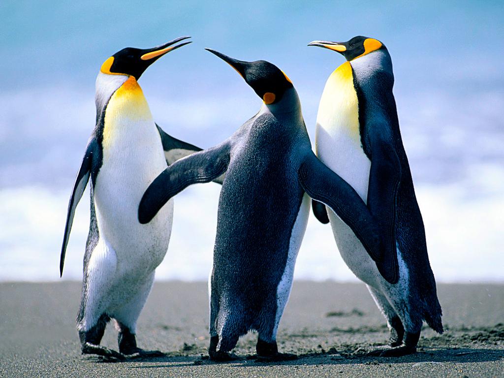 ¿Por qué no vuelan los pingüinos?