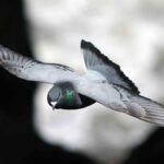 ¿Por qué nunca vemos crías de paloma?
