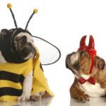 Por qué obedece tu perro