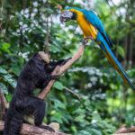 ¿Por qué son tan listos los monos y los loros?