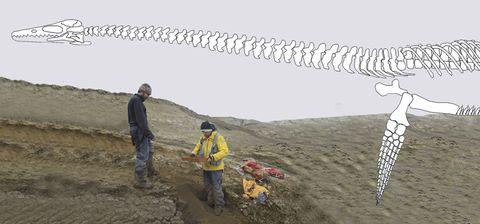 Descubren en la Antártida un reptil gigante