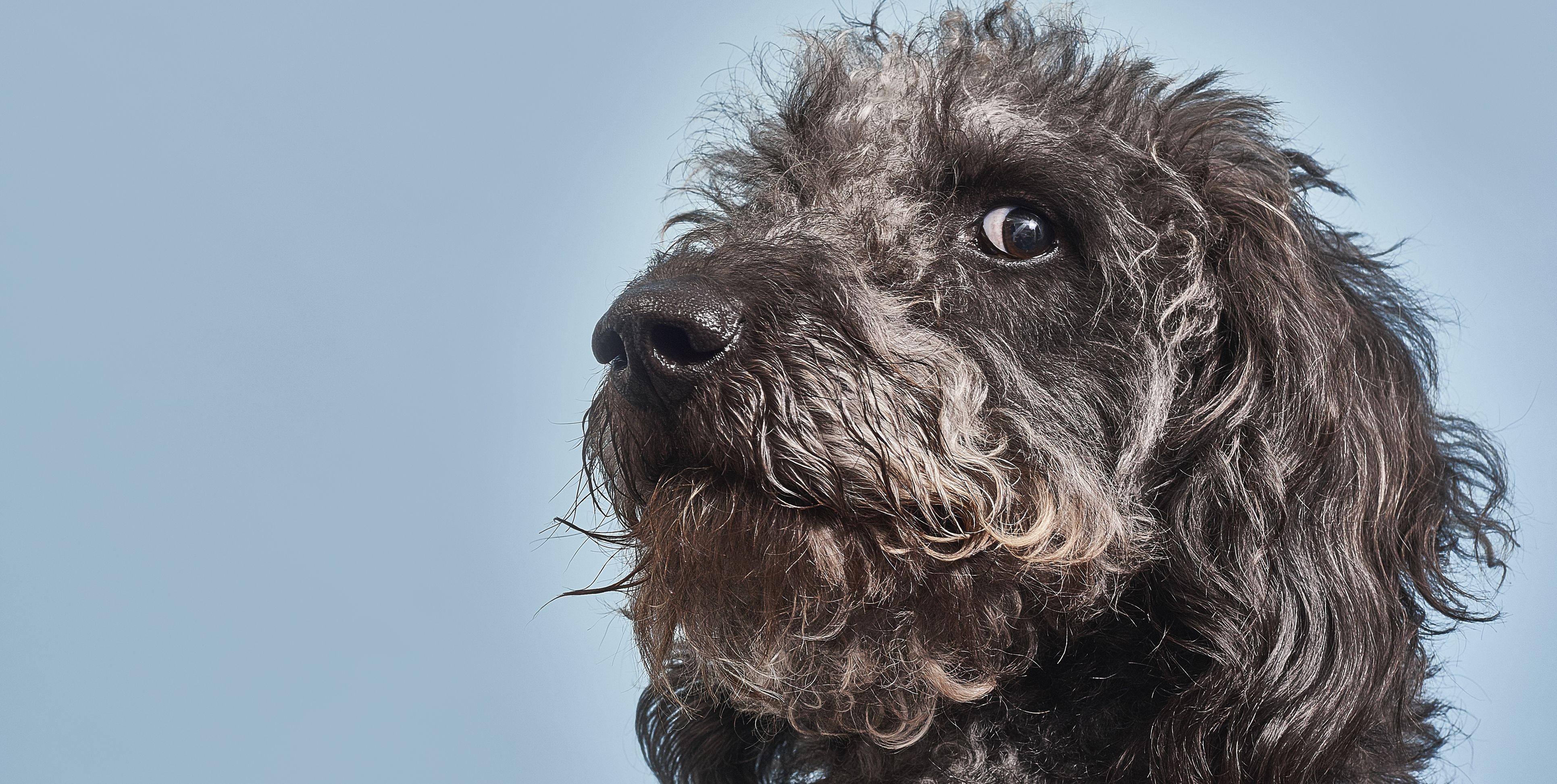 10 curiosidades que (casi seguro) desconoces de tu perro