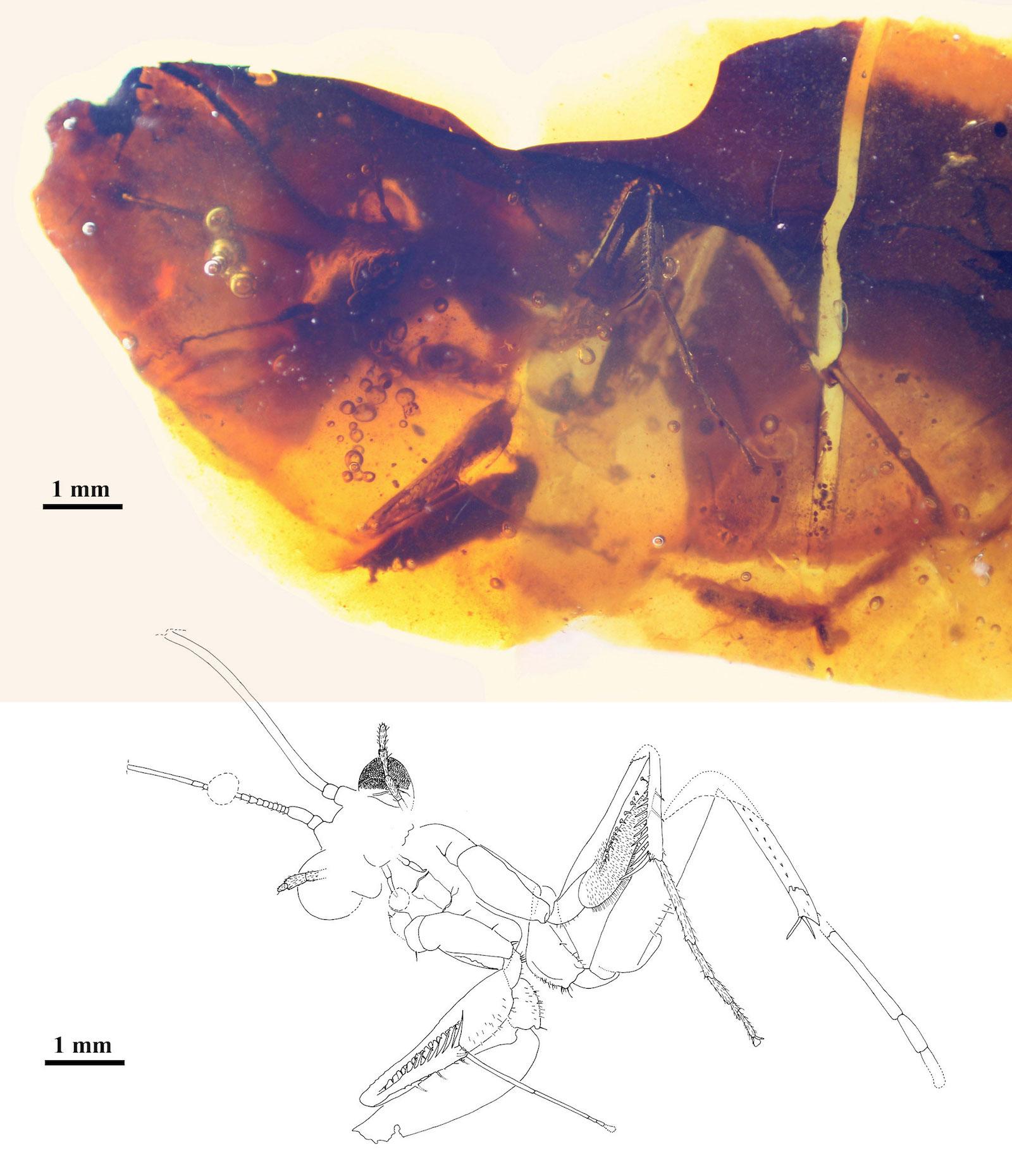 Primera mantis religiosa fósil hallada en España