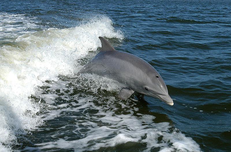 ¡Prohibido nadar con los delfines !