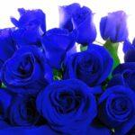¿Pueden las rosas florecer de color azul? Ahora sí