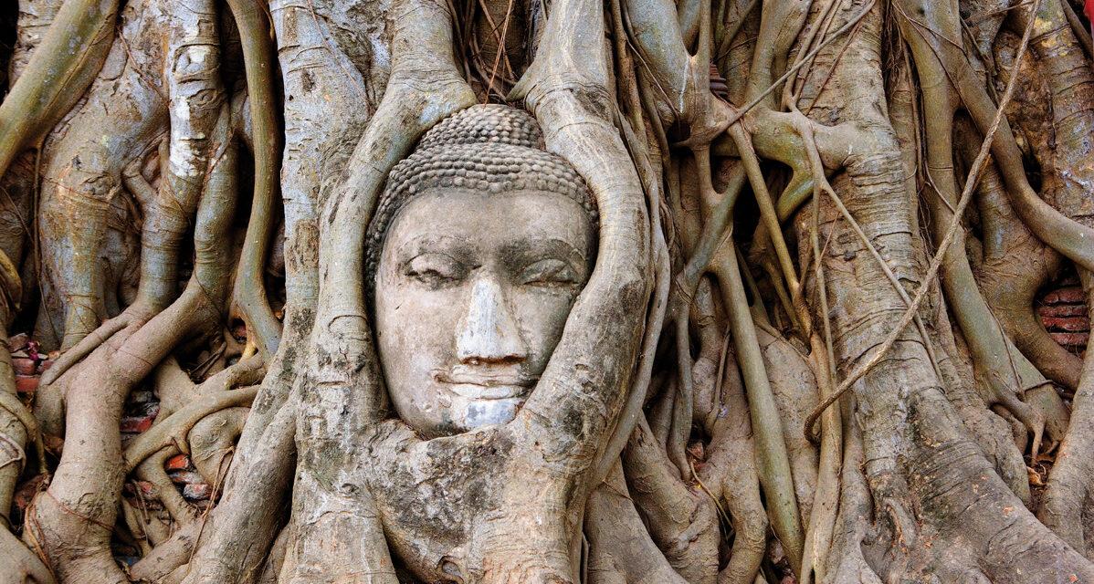¿Qué árbol tiene las raíces más largas?