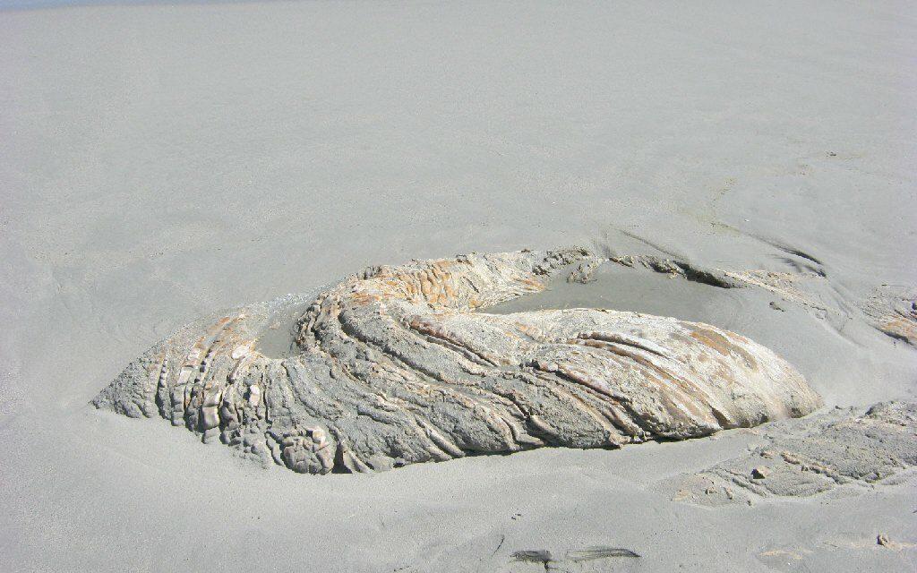 ¿Qué es esta extraña masa de tejido que apareció flotando en Hawái?