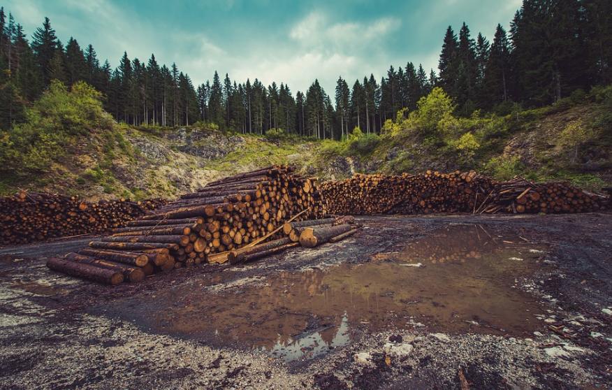 ¿Qué tienen que ver los papeles de Panamá con la deforestación?