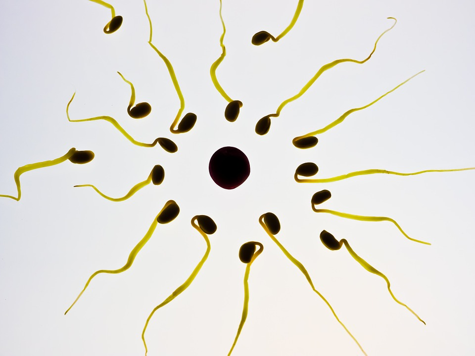 Reprogramar células para devolver la fertilidad