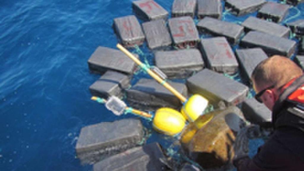 Rescatan a una tortuga atrapada en un alijo de 800 kilos de cocaína