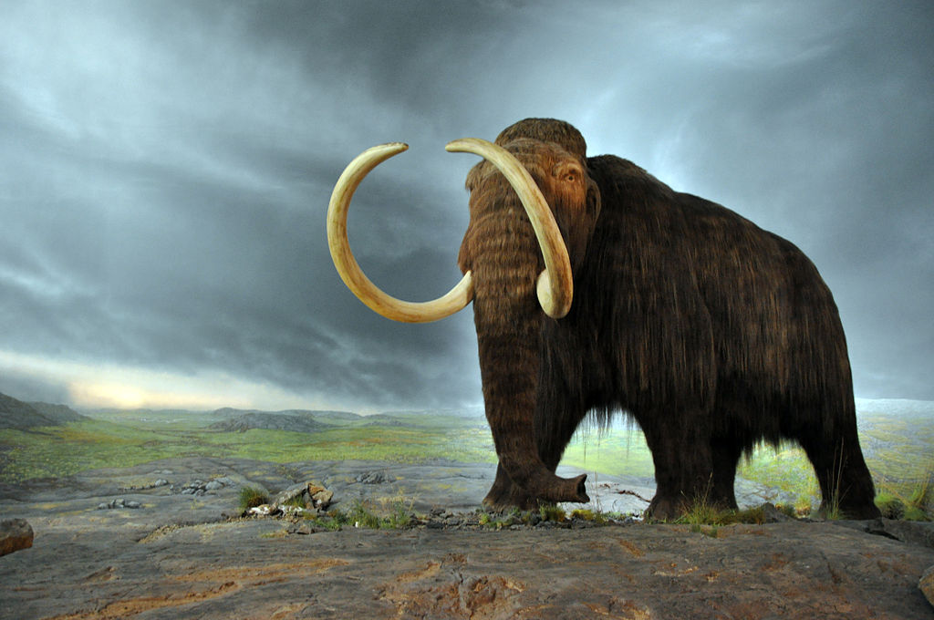Resucitar a los mamut… ¿para qué?