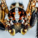 ¿Sabíais que el miedo a las serpientes y a las arañas podría ser innato?